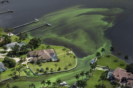 Blue-green algae enveloping an area along the St. Lucie River in Stuart, on the east coast of Florida. Associated Press